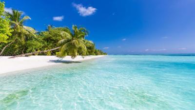 Win10主题:下载Microsoft新的Beach Time PREMIUM主题包